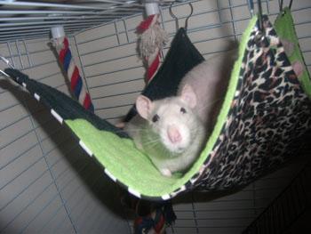 Email: snugglebug.hammocks@yahoo.co.uk